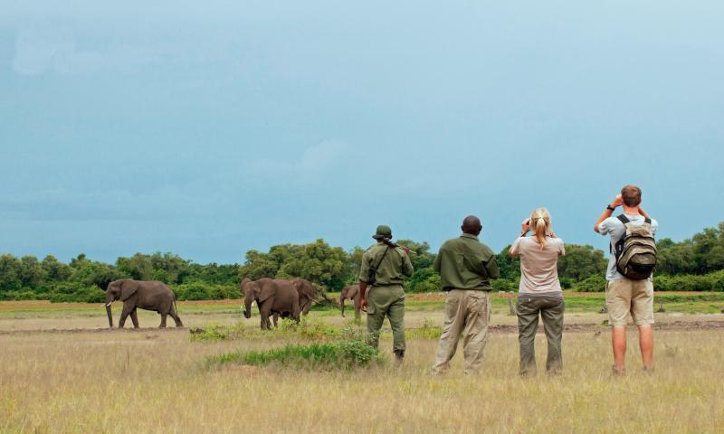 Africa's Beast Walking Safaris