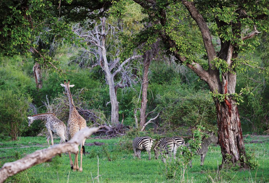 Safari for less green season